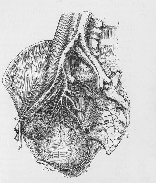 Engraving「Human Heart」:写真・画像(8)[壁紙.com]