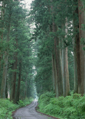 Nikko City「Nikko Driveway Lined with Cypress Trees」:スマホ壁紙(18)