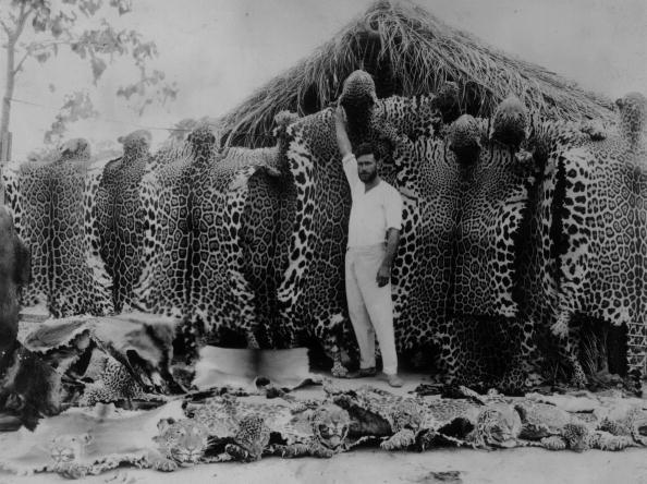 Tropical Rainforest「The Tiger Man」:写真・画像(4)[壁紙.com]