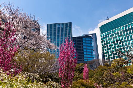 ソメイヨシノ「オフィスや庭園東京の公園」:スマホ壁紙(1)