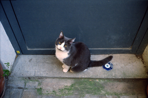 子猫「kitten on a doorstep」:スマホ壁紙(1)