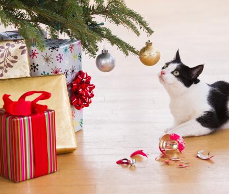 Misfortune「USA, New Jersey, Jersey City, cat breaking Christmas ornaments」:スマホ壁紙(17)