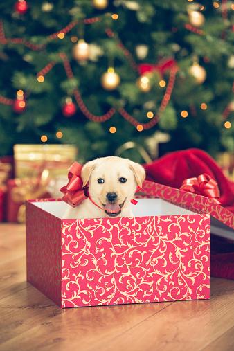 クリスマスツリー「子犬のクリスマスプレゼント」:スマホ壁紙(18)