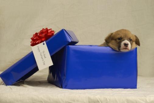 父の日「Puppy in a gift box」:スマホ壁紙(12)