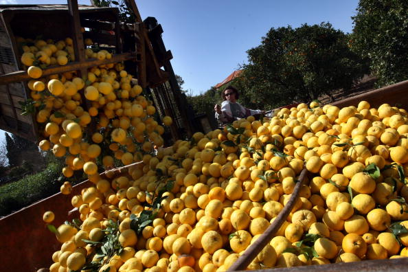 Agriculture「Rising Agricultural Costs Force Food Prices Higher」:写真・画像(10)[壁紙.com]