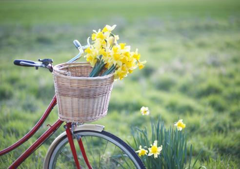 イースター「Freshly picked daffodils in a bicycle front basket」:スマホ壁紙(17)