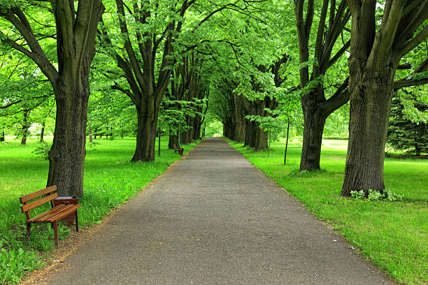 Path in Park:スマホ壁紙(壁紙.com)