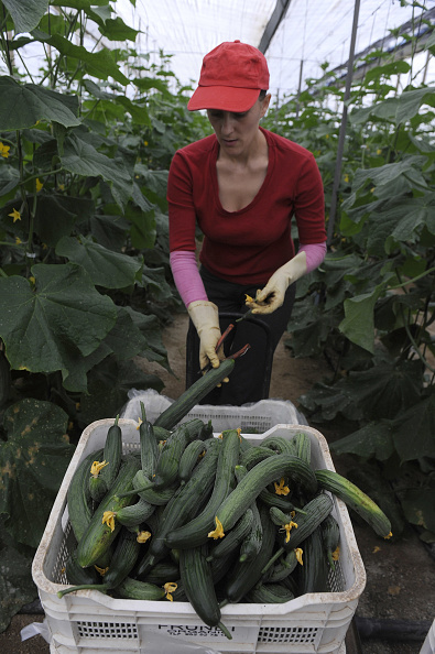 Greenhouse「Spanish Farmers Suffer Losses Due To EHEC Outbreak」:写真・画像(6)[壁紙.com]