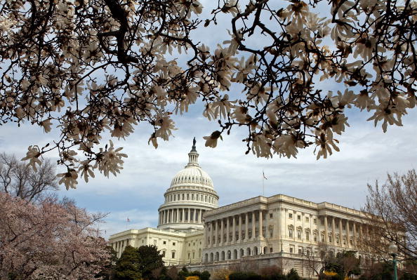Capitol Hill「Cherry Blossoms Bloom In Washington DC」:写真・画像(12)[壁紙.com]