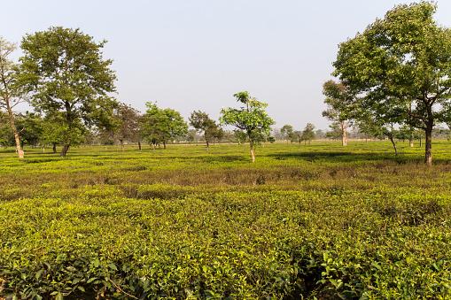 Tea「Tea factory in Darjeeling」:スマホ壁紙(10)