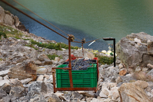 Homemade「The Grape Harvest Is Gathered In On The Slopes Surrounding The Sil River」:写真・画像(18)[壁紙.com]