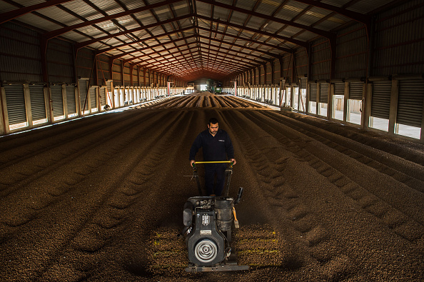 Finance and Economy「Tiger nuts Harvest In Valencia」:写真・画像(19)[壁紙.com]