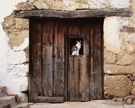 雑種のネコ「Spain,Moggaraz,Sierra de Gredos,cat sitting in window of wooden door」:スマホ壁紙(15)