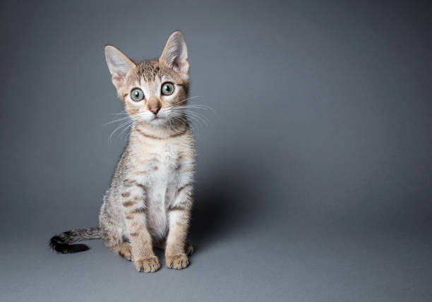 かわいらしいキトントラ猫:スマホ壁紙(壁紙.com)