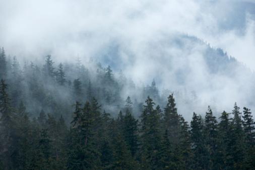 Fog「Fog over forest」:スマホ壁紙(11)