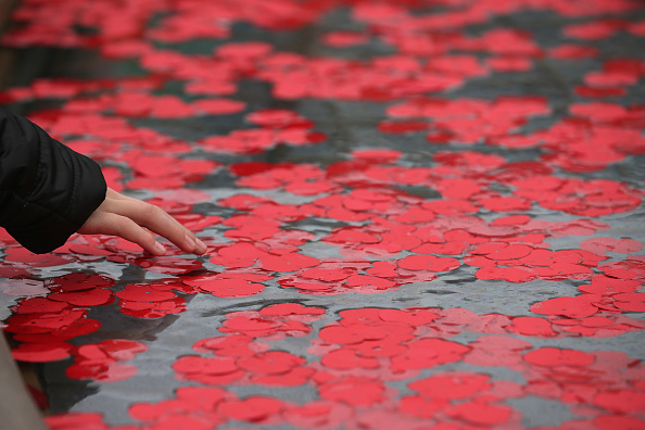Poppy - Plant「Armistice Day Is Observed In London」:写真・画像(17)[壁紙.com]