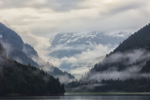 松林「Looking into the fog shrouded estuary of Khutzeymateen Grizzly Bear Sanctuary」:スマホ壁紙(10)