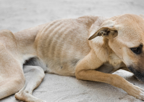 Slim「Starving Dog」:スマホ壁紙(8)