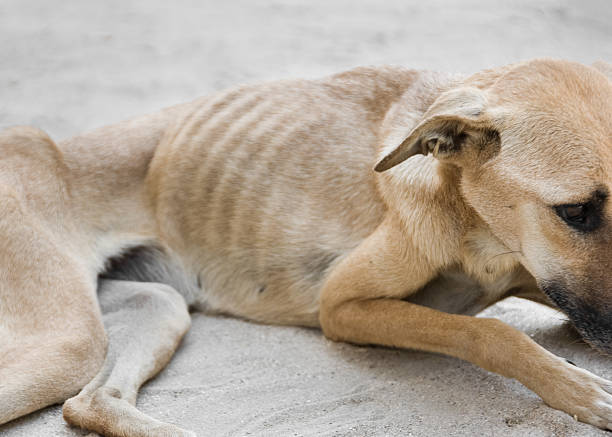 Starving Dog:スマホ壁紙(壁紙.com)