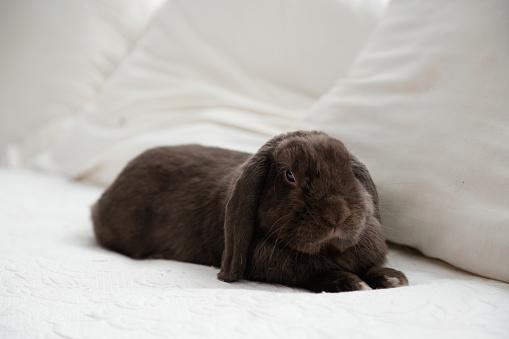 イースター「かわいいウサギの ram は、イースター休暇中にベッドに座る」:スマホ壁紙(2)