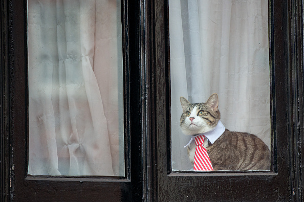 猫「Swedish Prosecutors Interview Julian Assange On Sexual Assault Claims At The Ecuadorian Embassy」:写真・画像(4)[壁紙.com]