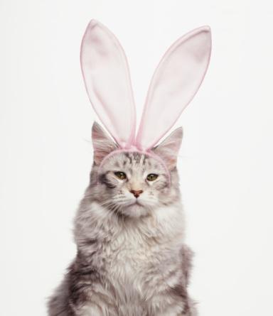 Three Quarter Length「Cat Wearing Easter Bunny Ears」:スマホ壁紙(4)