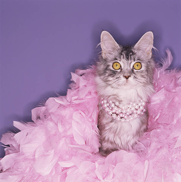 Cat wearing boa and pearls:スマホ壁紙(壁紙.com)