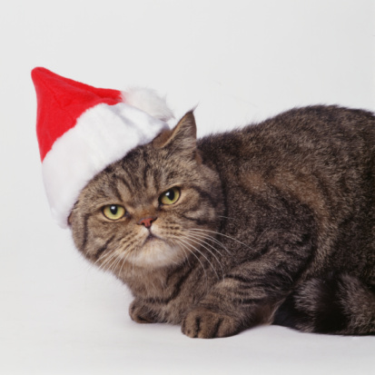 Animal Whisker「Cat wearing Santa Hat」:スマホ壁紙(10)