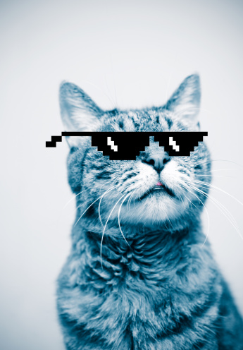 Cool Attitude「Cat wearing pixelated sunglasses」:スマホ壁紙(2)
