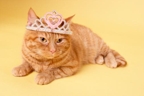 Crown - Headwear「Cat wearing tiara」:スマホ壁紙(0)