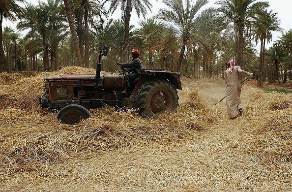 Baghdad「Iraqi Farmers Harvest Barley」:写真・画像(3)[壁紙.com]