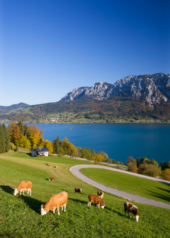 Salzkammergut「Austria, Attersee, View of Hoellen Mountain during autumn with cows grazing in foreground」:スマホ壁紙(7)