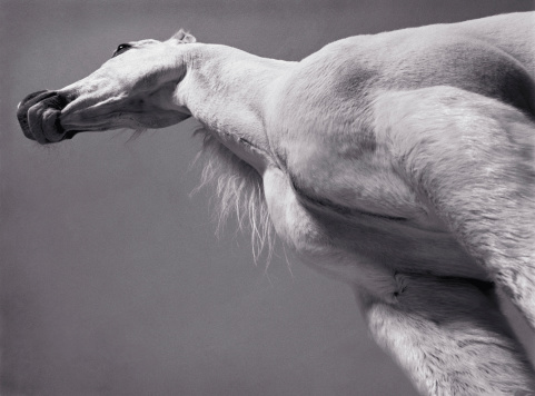 Horse「White Arabian horse, low angle view (toned B&W)」:スマホ壁紙(11)