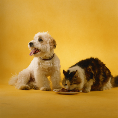 Eating「Dog and cat」:スマホ壁紙(2)