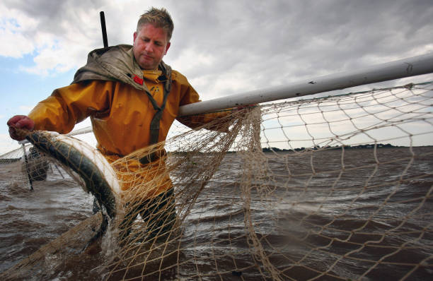 Haaf Netters Fish For Their Daily Catch In Solway Estuary:ニュース(壁紙.com)