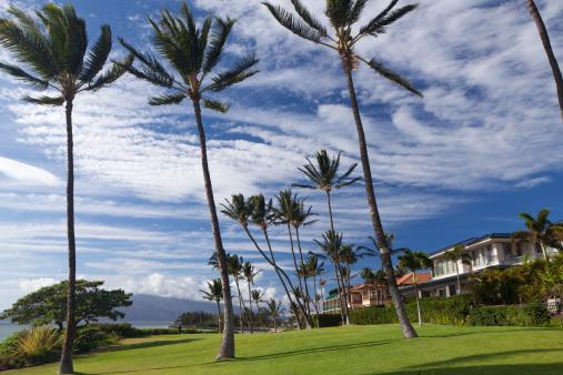 Kihei「Hawaii Palm tree beach scenic on maui」:スマホ壁紙(7)