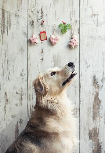 お正月「犬とクリスマスの装飾」:スマホ壁紙(9)