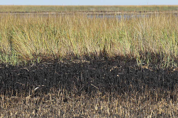 Oil Spill「Nearly 8 Months After BP Oil Spill, U.S. Gulf Coast Still Affected」:写真・画像(18)[壁紙.com]