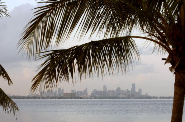 Tree「Florida To Join California As Leader In Reducing Carbon Emissions」:写真・画像(9)[壁紙.com]