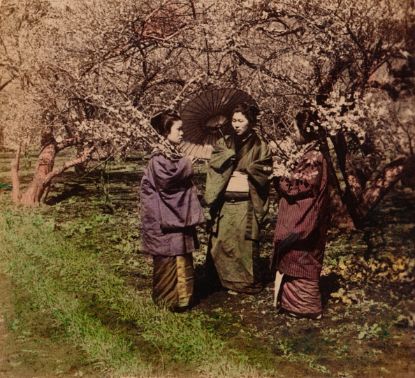 着物「'Under The Plum Blossoms, Sugita, Japan', 1896」:写真・画像(6)[壁紙.com]