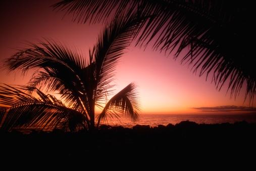 Frond「Romantic tropical sunset」:スマホ壁紙(14)