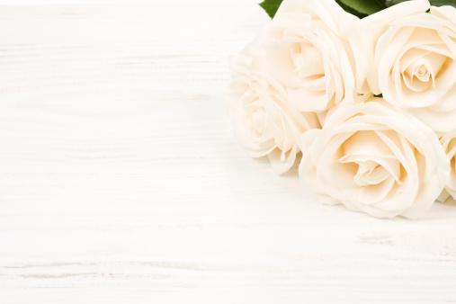 薔薇「ホワイトのローズ」:スマホ壁紙(6)