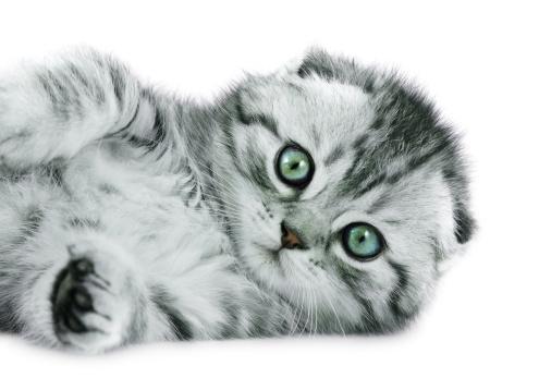 Mixed-Breed Cat「baby cat」:スマホ壁紙(4)
