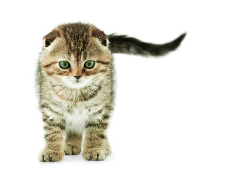 Mixed-Breed Cat「baby cat」:スマホ壁紙(11)