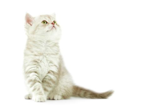 Mixed-Breed Cat「baby cat」:スマホ壁紙(9)