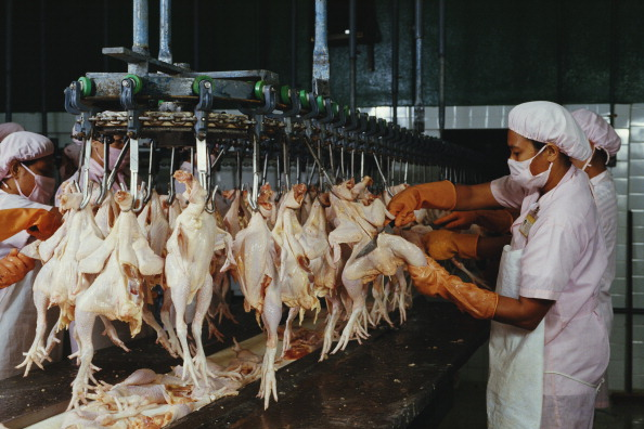 Farm「Poultry Factory」:写真・画像(10)[壁紙.com]