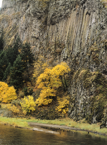 Basalt「Maple trees with golden fall foliage stand before columns of Basalt. Columbia River Gorge National Scenic Area, Oregon.」:スマホ壁紙(11)
