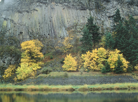 Basalt「Maple trees with golden fall foliage stand before columns of Basalt. Columbia River Gorge National Scenic Area, Oregon.」:スマホ壁紙(14)