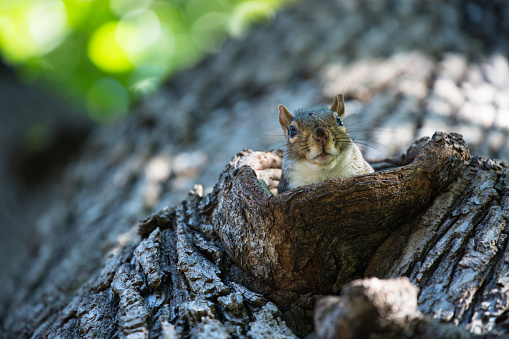 リス「Close up view of squirrel emerging from nest」:スマホ壁紙(11)