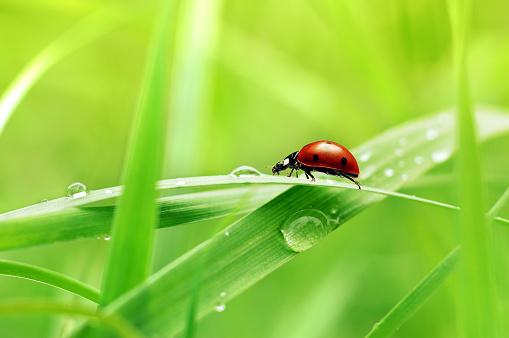 Ladybug「Close up view of ladybug on blade of grass 」:スマホ壁紙(5)
